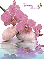 Схема для вышивки бисером Нежная орхидея, фото 1