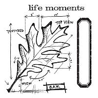 Ножи + штампы Sizzix Framelits Die Set 4PK w / Stamps - Leaf Blueprint , 659373