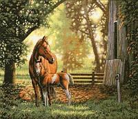 Набор для вышивания  Лошадь с жеребенком
