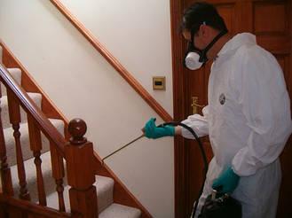 Если Вы все таки обнаружили клопов дома, то Вам надо срочно провести санитарную обработку помещения.