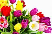 Поздравляем Вас с праздником Весны !