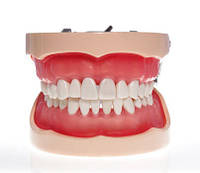 Модель тренир. со съёмными зубами (нижняя и верхняя челюсть) HTS-A10 200Н