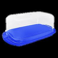 Масленка Алеана синяя