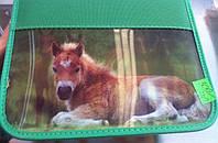 """Пенал на 2 отделение """"Две картинки на одном пенале - Жеребёнок, лошади"""" Kalnex"""