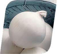 Семена лука Стерлинг F1 250000 семян Seminis