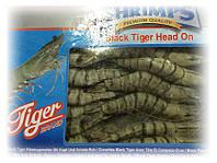 Креветка тигровая сырая с головой 16-20