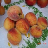 """Персик """"Желтоплодный ранний"""""""