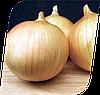Семена лука Экзакта F1 250000 семян Seminis