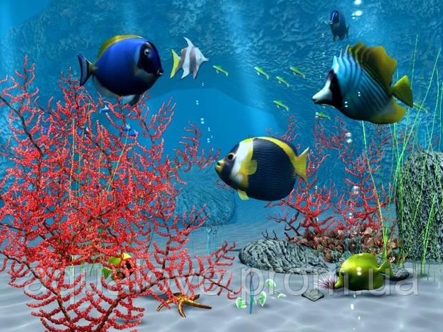 Обратный осмос в аквариуме: показания и предостережения к использованию