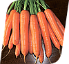 Семена моркови Карболи F1 200000 семян Seminis