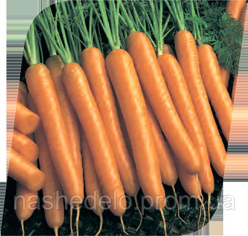 Семена моркови Карведжо F1 200000 семена Seminis