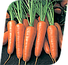 Семена моркови Ройал Шансон 100 грамм Seminis