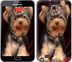 """Чехол на Samsung Galaxy Note i9220 Йоркширский терьер """"929c-316-328"""""""