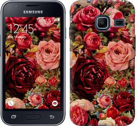 """Чехол на Samsung Galaxy J1 Mini J105H Цветущие розы """"2701c-258-328"""""""