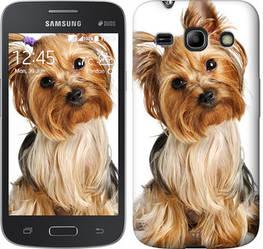 "Чехол на Samsung Galaxy Star Advance G350E Йоркширский терьер с хвостиком ""930c-210-328"""