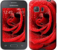 "Чехол на Samsung Galaxy Young 2 G130h Красная роза ""529c-206-328"""
