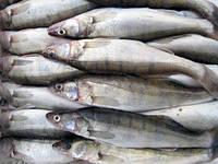 Речная свежая и мороженная рыба