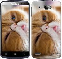 """Чехол на Lenovo S920 Смешной персидский кот """"3069c-53-328"""""""