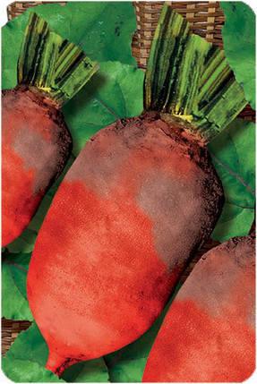 Свекла кормовая Рекорд Поли, 20 кг Мешок — семена кормовой свеклы. Польша, фото 2