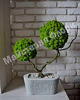 """Подвійне стабілізоване дерево у бетонному кашпо """"Овал"""""""
