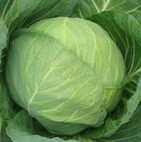 МИРРОР F1 -  семена капусты белокочанной, SYNGENTA, фото 1