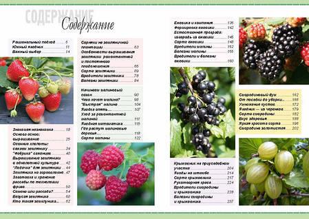 Урожайный ягодник, фото 2