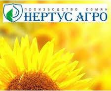 Семена подсолнечника HC Фантазия Нови Сад