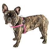 Шлея для собак AGILA SPORT 2 Ferplast Ферпласт нейлоновый шнур, цвет в ассортименте, фото 4