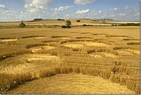 Ретарданты для озимых зерновых
