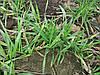 Жидкое комплексное удобрение для подкормки озимых культур АКТИВНЫЙ СТАРТ. Стимулятор роста и Антистресант для адаптации растений весной.