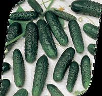 Семена огурца Маша F1 1000 семян Seminis