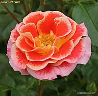 Роза Airbrush ®(Аэрограф).