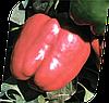 Семена перца сладкого Красный Рыцарь F1 500 семян Seminis