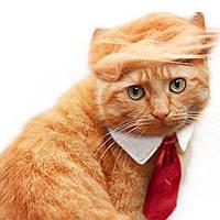 Pet Собака Кот Трамп Стиль Кот Парик Домашние животные Костюмная головка Одежда Одежда Игрушка для рождественских вечеринок