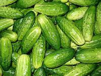 Семена Огурец Нежинский весовые