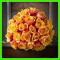 Роза чайно-гибридная Черри бренди (саженцы)