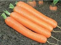 Морковь Дордонь F1 50 000 сем (Фракция 1,4-1,6 г) Сингента (Syngenta)