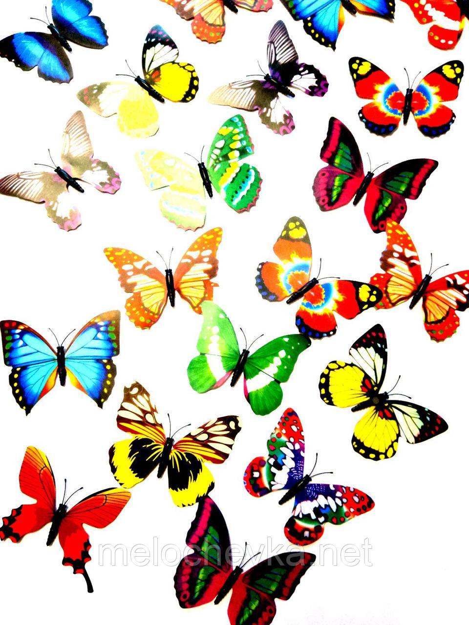 Бабочка на магните для интерьера