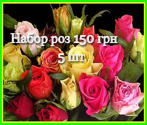 Набор роз без указания сорта  (саженцы)