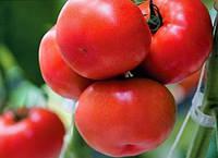 Семена томата Эмреро F1 500 сем. Сингента.