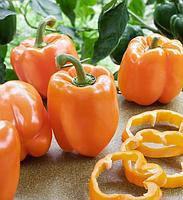 Семена Перец сладкий Калифорнийское чудо оранжевое  0,3 грамма Смачний