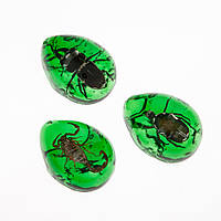 """Кулон """"Коллекция насекомые"""" в зеленой смоле (акрил) 4х5см"""