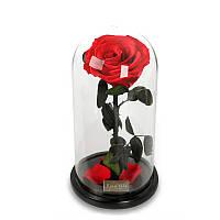 Para Ella Консервированный свежий цветок роз с павшими лепестками в стекле Dome на деревянной базе в качестве подарка для любовника,День святог