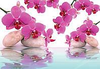 Фотообои бумажные на стену 368х254 см : Орхидеи на воде (151P8CN), фото 1
