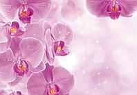Фотообои цветы 3D 368x254 см Волшебные орхидеи (149P8)