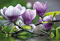 Фотообои флизелиновые на стену 368х254 см : Гармония цветов (160V8CN), фото 1
