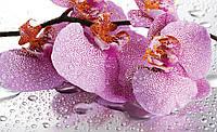Фотообои 3D цветы 368x254 см Лепестки орхидеи (184P8)