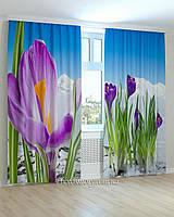 Фотошторы цветы крокусы синие крупный план