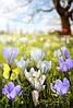 Фотопечать на Римских шторах / Цветы и бабочки