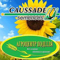 Семена подсолнечника Коссад Семанс